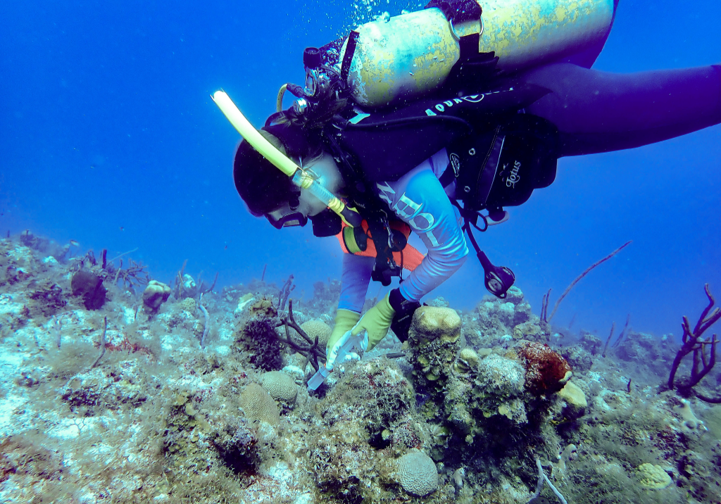 Cynthia Becker collecting seawater from around corals at Buck Island, St. Thomas, USVI to understand the seawater surrounding healthy and diseased corals. Photo: Amy Apprill
