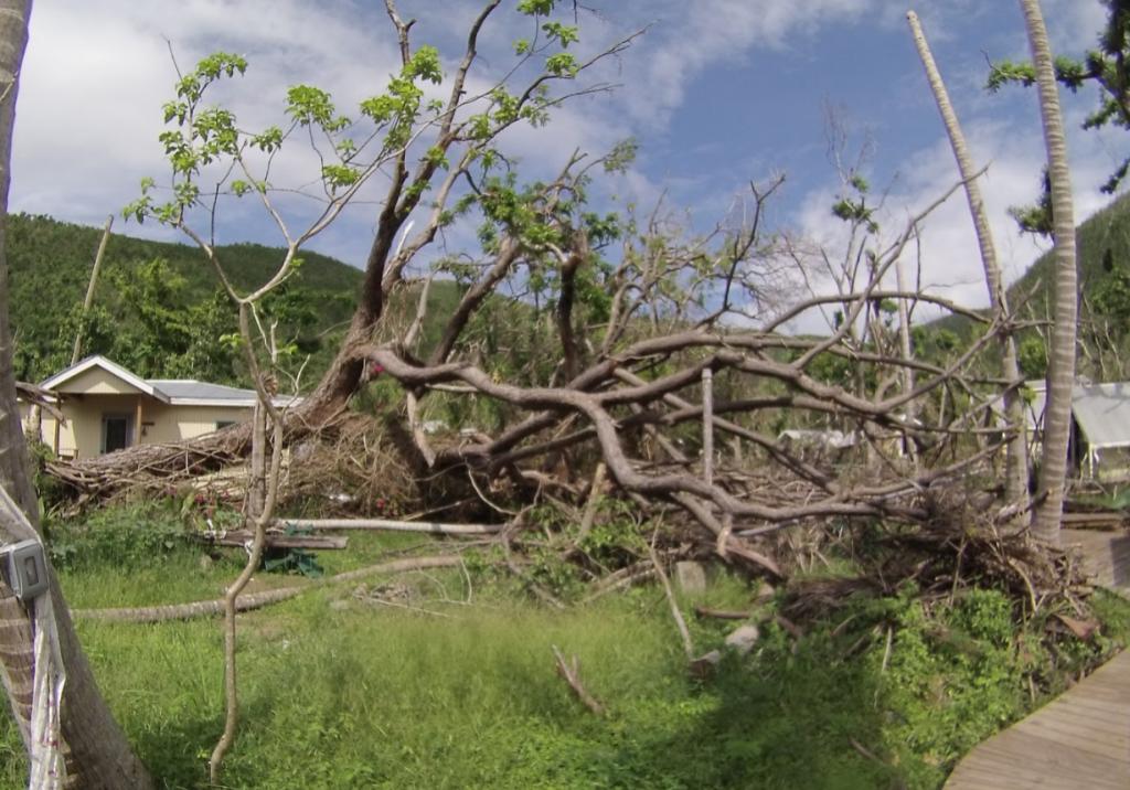 A downed tree crushed the research building at the Virgin Island Environmental Resources station (VIERS).