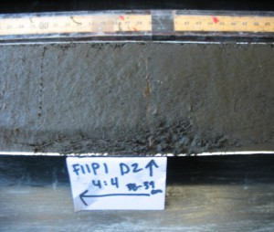 This picture shows leaves found within a core, before they are removed for C14 analysis.