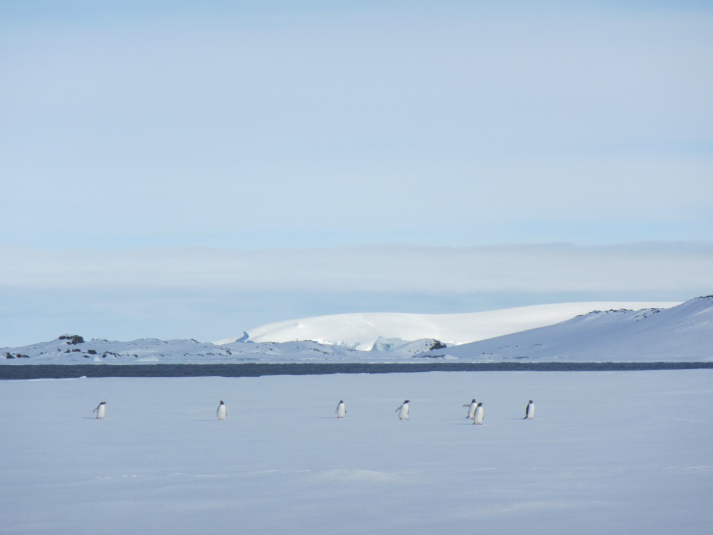 Penguins on the sea ice in Arthur Harbor.