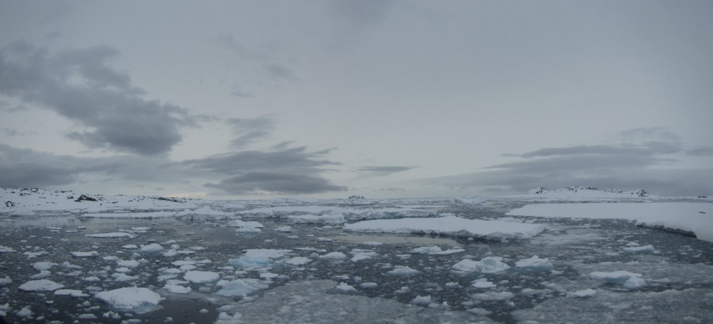 View from the Palmer Station pier at almost 10 p.m., November 11, 2015. Some of the fast ice in Hero Inlet has broken off into scattered floes. Icebergs are visible on the horizon.