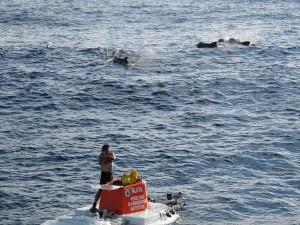 alvin whales
