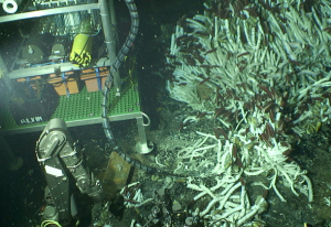 The Vent-SID microbial incubation platform on the seafloor