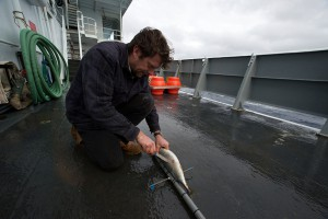 Aberdeen University biologist Alan Jamieson readies one of his two landers with fresh bait for redeployment. (Photo by Ken Kostel, Woods Hole Oceanographic Institution)