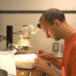 Daniel Leduc from the National Institute of Water and Atmospheric Research examines amphipods infected with parasitic nematode worms. (Video still by Jeff Reed, Montana State University)