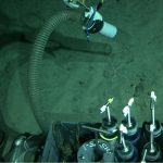 Nereus provided some of the most extensive and comprehensive views of the seafloor during its dives, enabling scientists to observe and sample individual animals as deep as 10,000 meters beneath the surface. Here, the vehicle's slurpgun homes in on a brittlestar.(Video still courtesy of the HADES program, Woods Hole Oceanographic Institution)