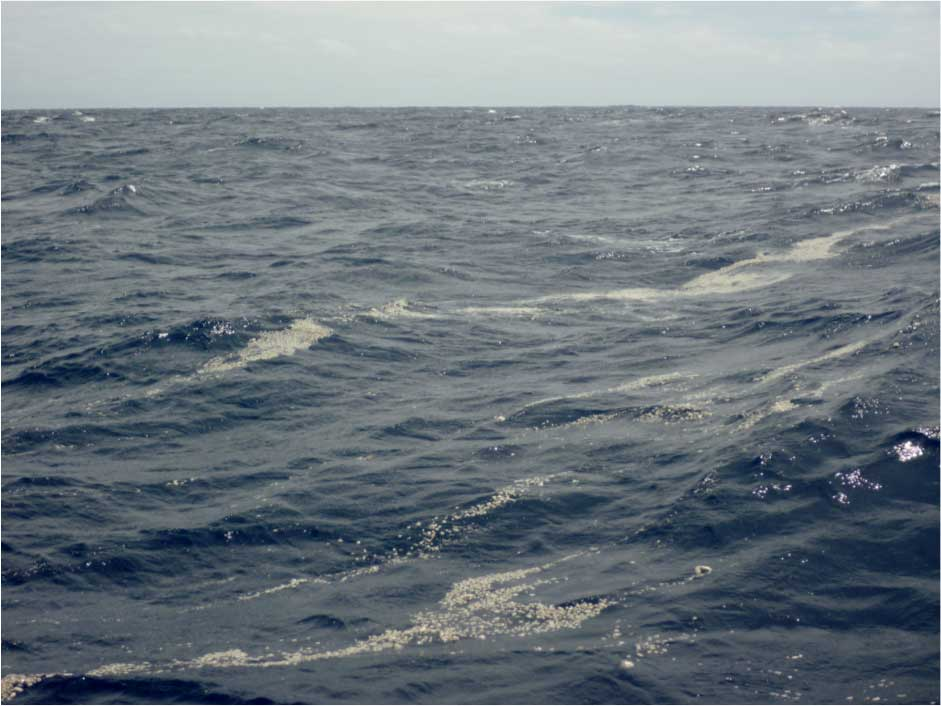 Ribbons of pumice clasts by a sailing crew in October 2012, in between Tonga and New Zealand. Photo courtesy: Ilkka Liukkonen