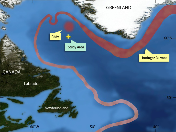 The red band shows the Irminger Current. The red circle shows a well-formed Irminger ring. The loop at the top of the current shows another ring that is about to break free from the current. The yellow cross marks the mooring location. (Illustration by Jack Cook, Woods Hole Oceanographic Institution)