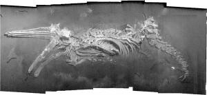 whale_photomosaic1
