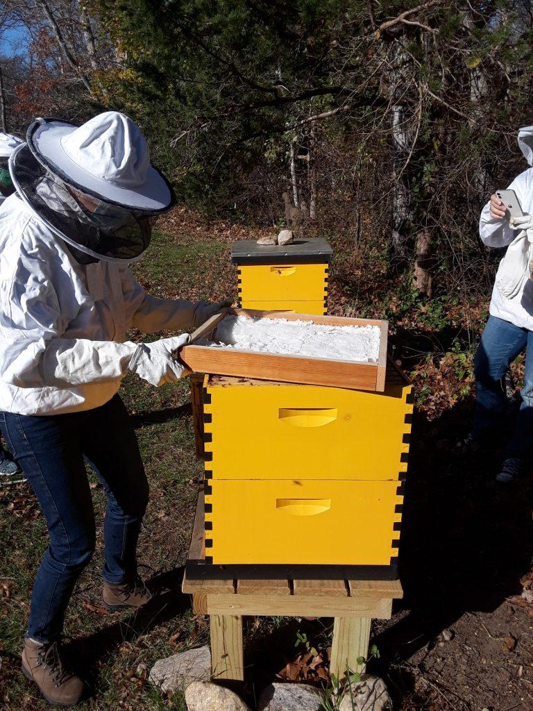 Winterizing the hive