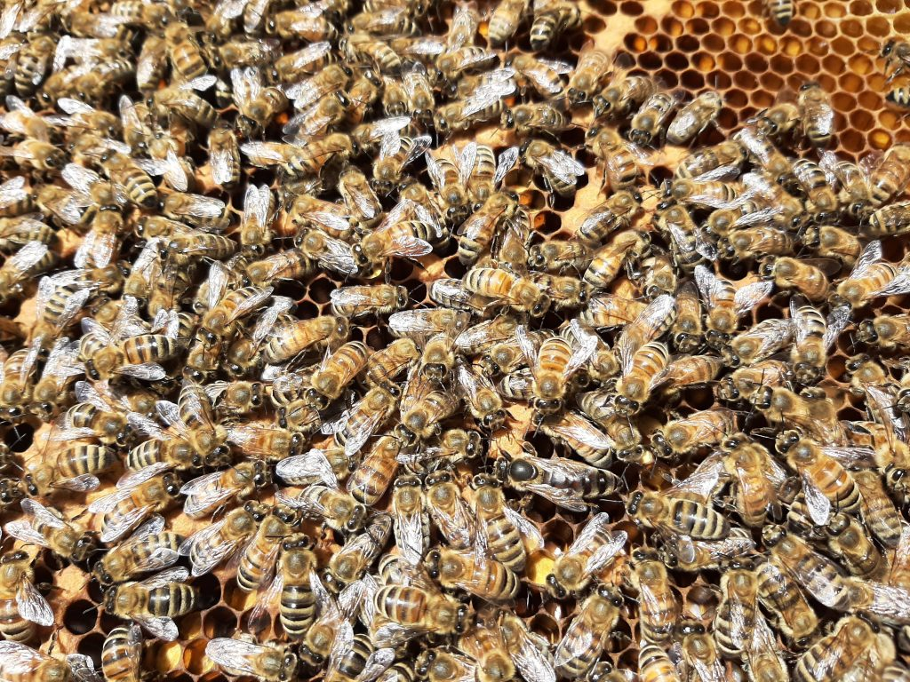Find the queen!